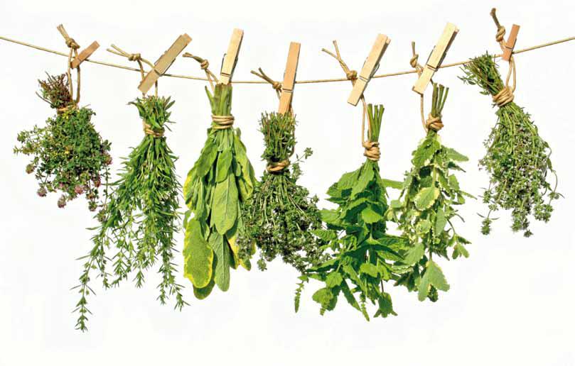 20 plantas medicinales que no pueden faltar en tu hogar
