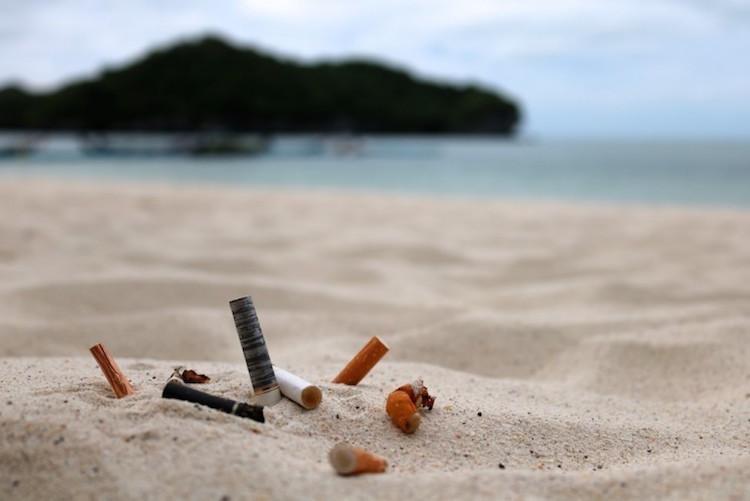¡Alarmante! Colillas de cigarrillos envenenan a las especies marinas
