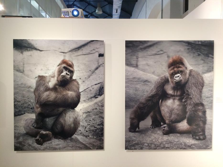(Fotos) El arte da un grito desesperado en contra del maltrato animal