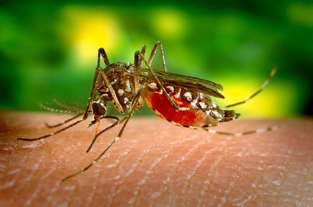 Brasil confirma 483 muertos por el brote de fiebre amarilla