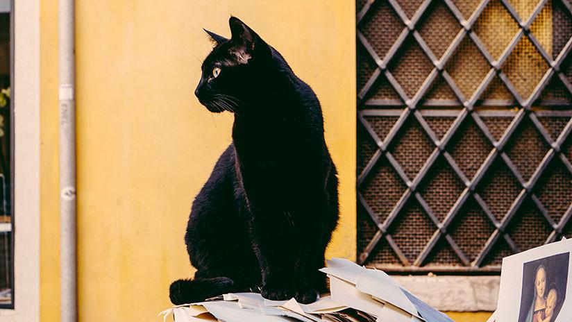 """(Foto) Imagen de un """"gato"""" logra confundir a todos, incluso a Google"""