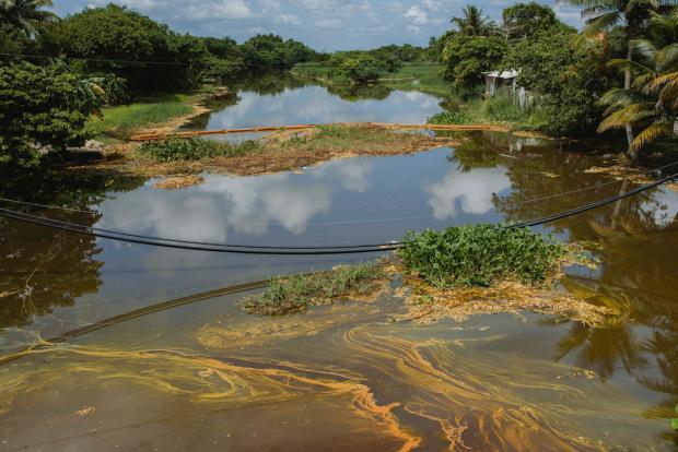 Mueren decenas de animales por derrame de un ducto de Pemex en Veracruz
