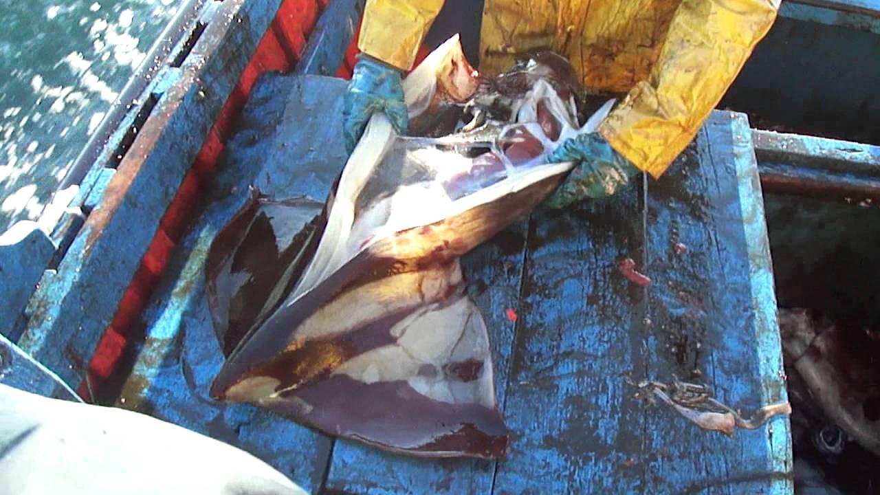 """Pescadores artesanales acusan """"campaña del terror"""" de la industria por proyecto que prohíbe pesca de arrastre de la jibia"""