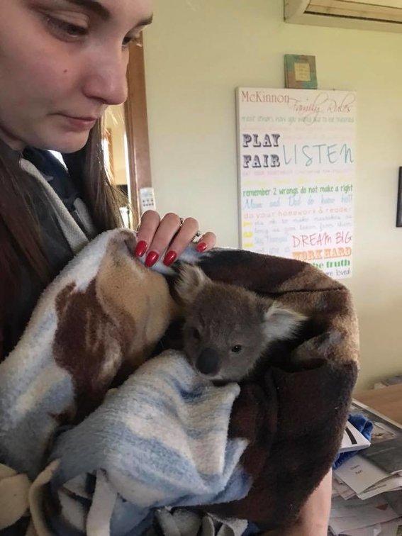 Un perro salva a un koala bebé de morir de frío en Australia