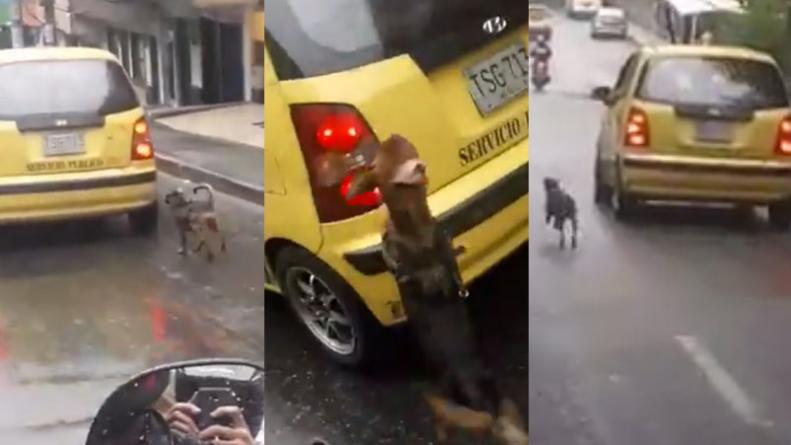 (Vídeo) Mujer abandona su perro en Medellín y este persigue el vehículo para hacerla reflexionar