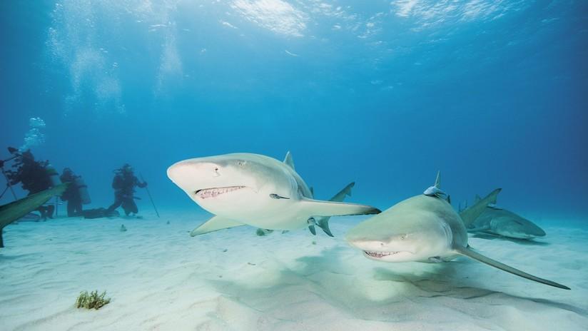 """(Video) Un buzo """"lucha"""" con un tiburón para salvarle la vida"""