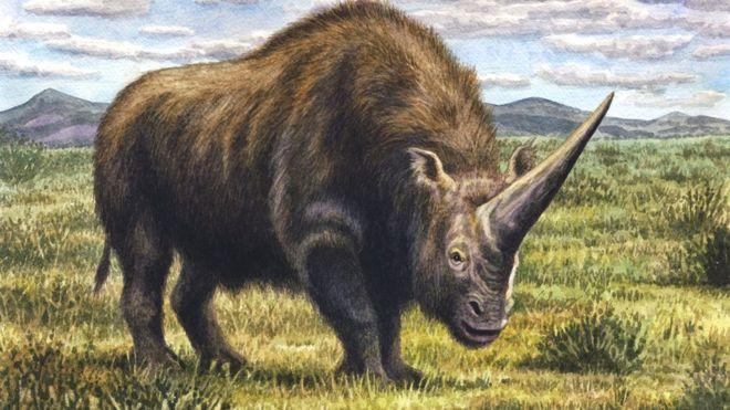 """El """"unicornio siberiano"""" vivió hace 39.000 años con los neandertales"""