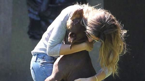 Un «súper» perro atacó a un hombre que maltrataba a su pareja