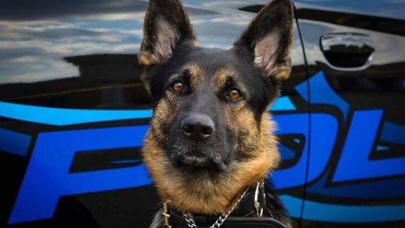 Ultimado un individuo tras dispararle al perro policial que lo perseguía