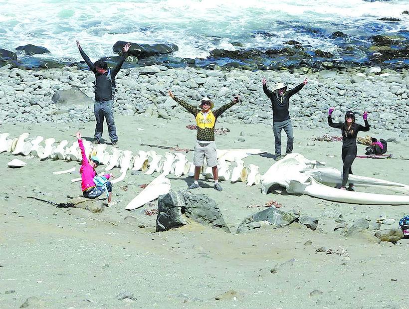 Excursionistas encuentran esqueleto de una ballena barbada en Antofagasta