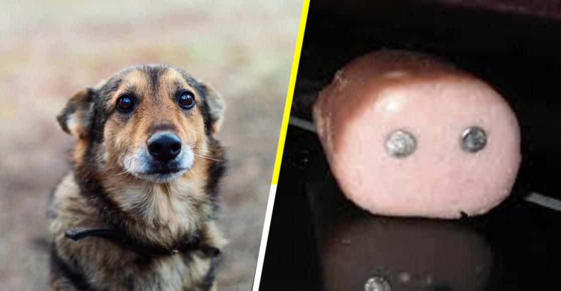 """Veterinario escribe carta y califica de """"asesinos"""" a quienes colocan trampas a los perros en los parques"""