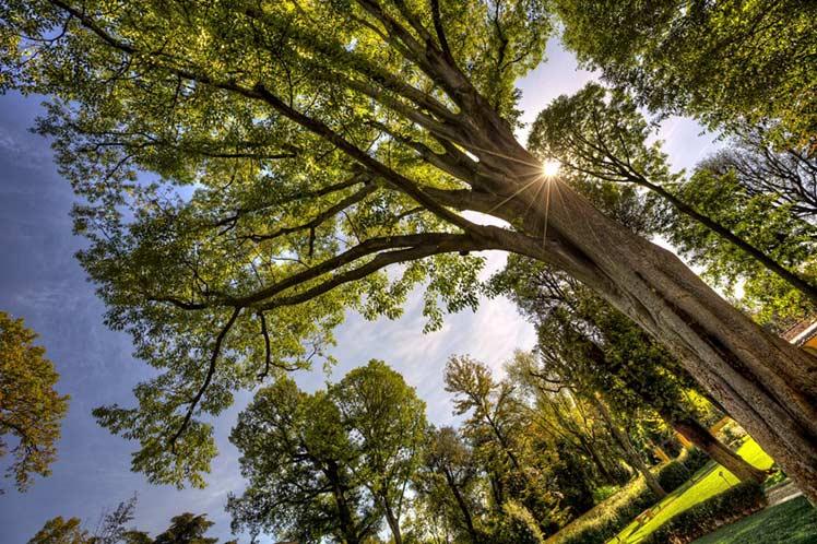 Investigadores italianos aseguran que el reposo vegetativo de árboles es influenciado por la luz artificial