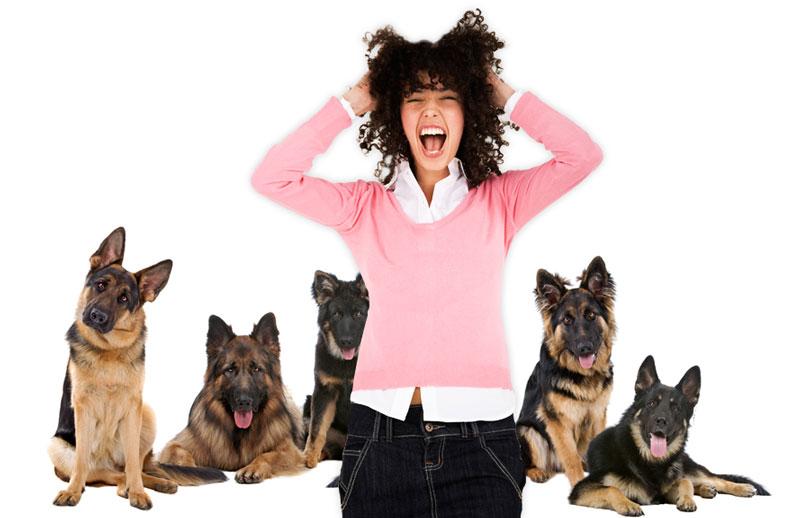 ¿Miedo irracional a los perros? entérate aquí si sufres de cinofobia
