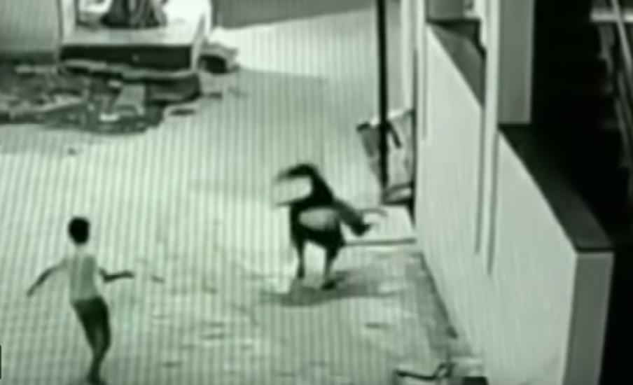 (Video) Un niño cae desde una altura de 12 metros y su amigo le sirve de amortiguador
