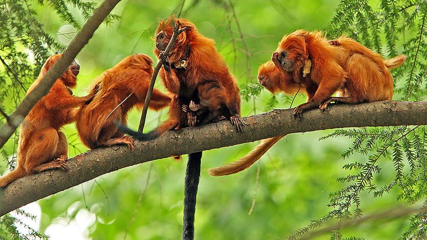 Indígenas proponen convertir la amazonía en una gigante  reserva natural
