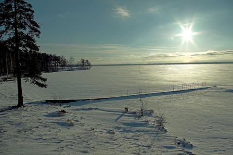 (Fotos) Flores de hielo crecen sobre un río congelado en Rusia