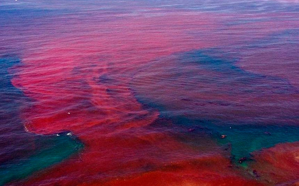 Marea roja toma las costas de Nicaragua