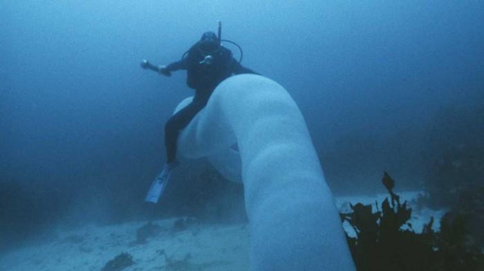 (Video) Buzos hallan un gigantesco 'gusano de mar' de 8 metros de largo