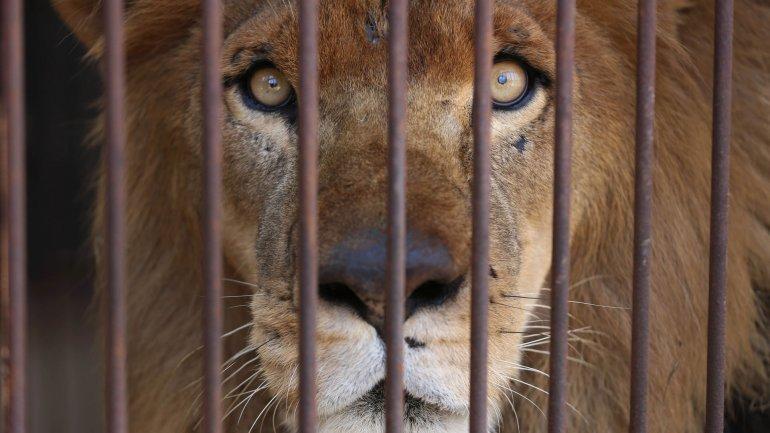 Una comunidad española prohíbe los circos con animales salvajes