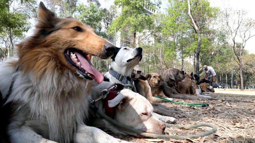 El maltrato animal no tiene castigo en México
