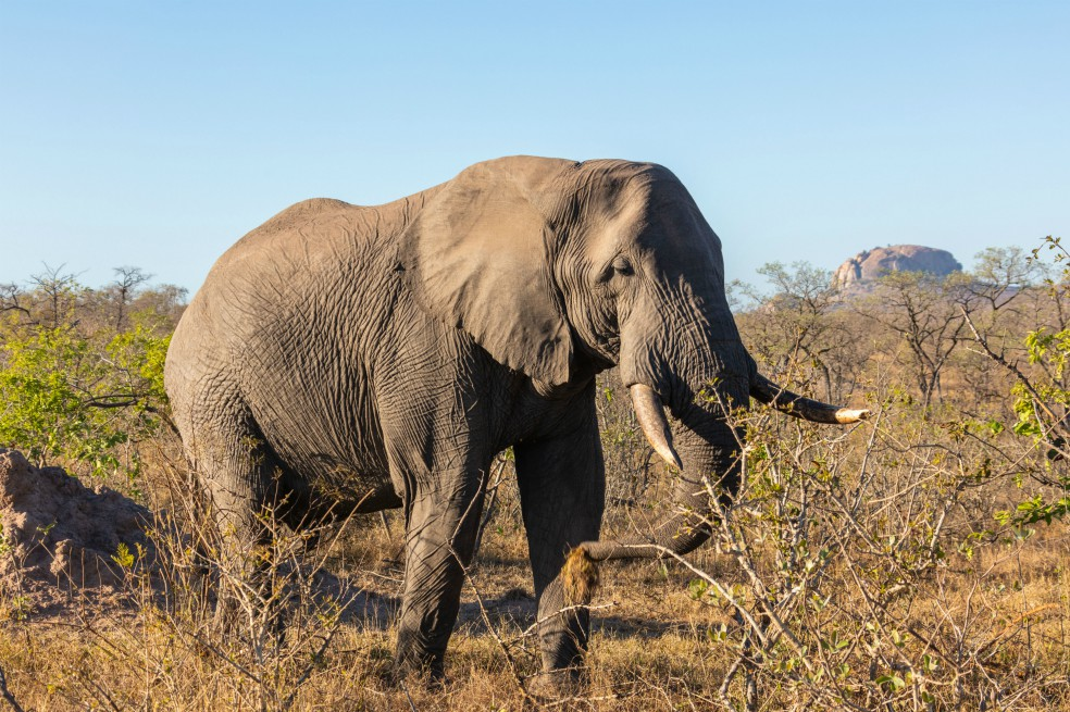 Se reduce la población de elefantes: 396 murieron este año en Kenia