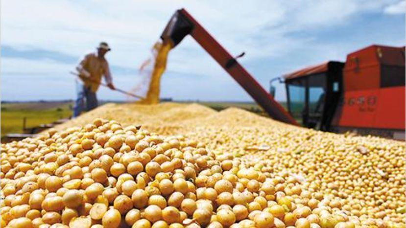 """La exportación de alimentos es el """"pilar"""" que mantiene a Argentina en el G20"""