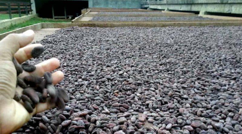 Cacao venezolano colmará espacios del  Cocoa Of Excellence de París