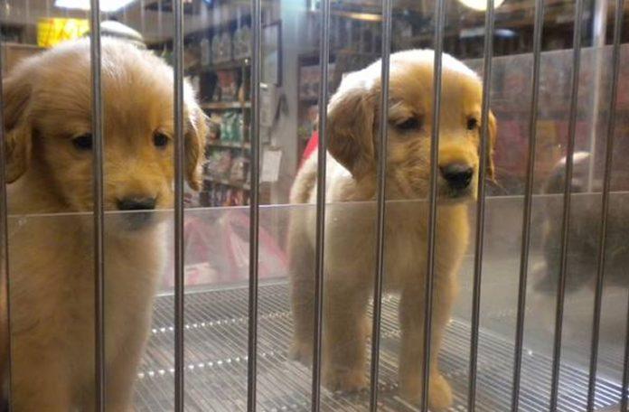 Reino Unido prohibirá la venta de perros y gatos en tiendas