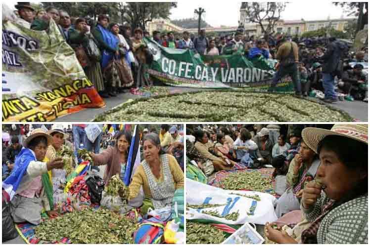 Práctica ancestral en Bolivia inició el masticado de hoja de coca