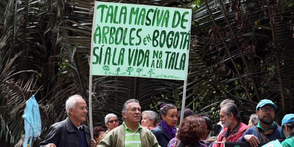 Tala masiva de árboles en Bogotá enfrenta a vecinos con las autoridades