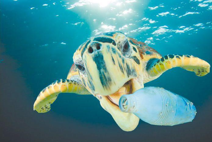 La lucha contra los residuos plásticos tiene dos grandes nuevos aliados