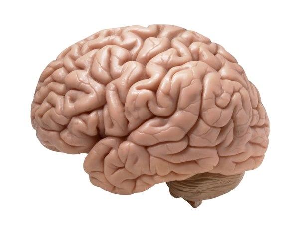 El cerebro humano creció casi cinco veces en siete millones de años, según biólogo ruso