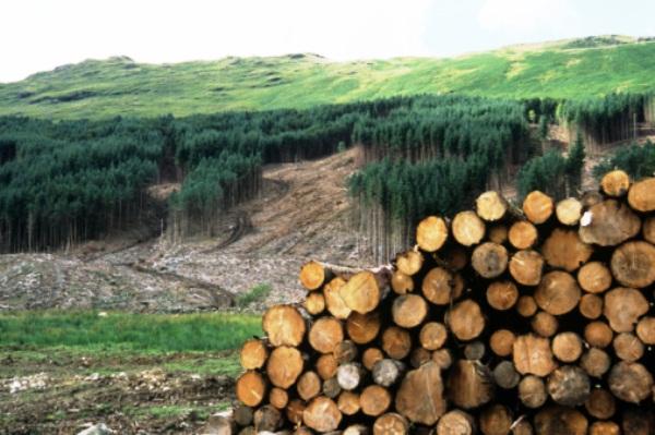 La desigualdad social provoca mayor deforestación en América Latina