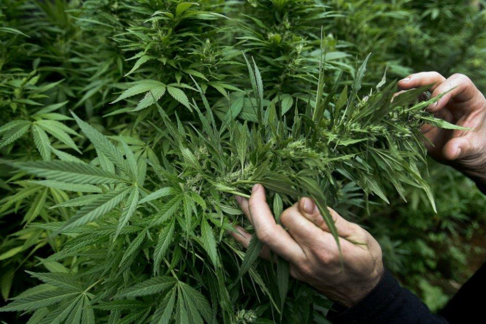 Valparaíso: Profesionales y consejos locales de salud se capacitaron en el uso medicinal del cannabis