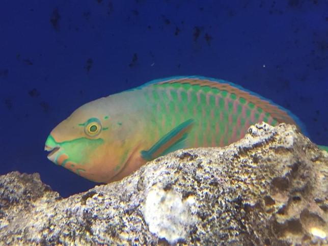Científicos descubren peces que viven en aguas profundas casi sin oxígeno