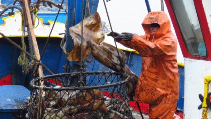 Proyecto que regula pesca de la jibia quedó listo para ser promulgado como ley
