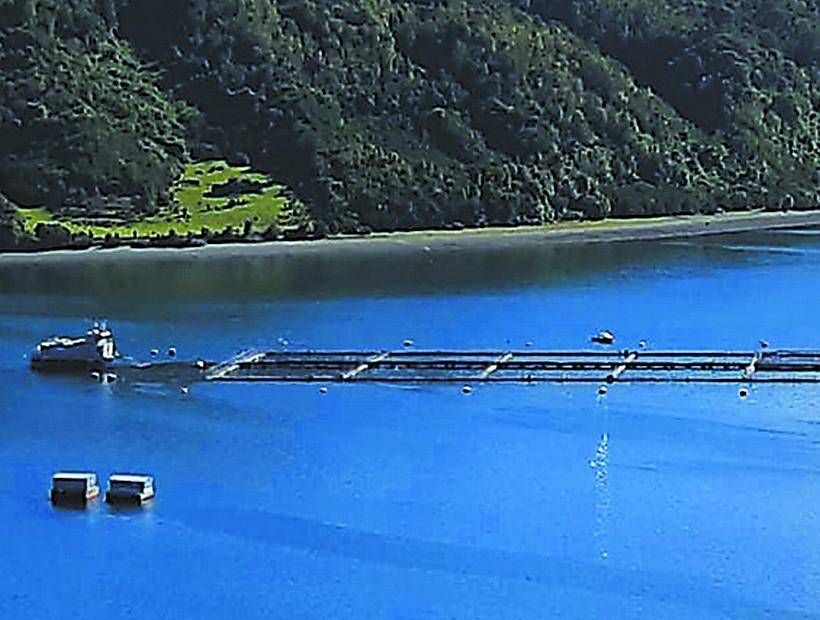 Organizaciones nacionales y regionales piden la salida de la industria salmonera de lagos, fiordos y canales del Sur