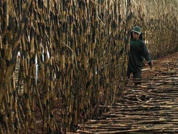 Ministerio Público denuncia intentos de invasión a Tierra Indígena en Brasil