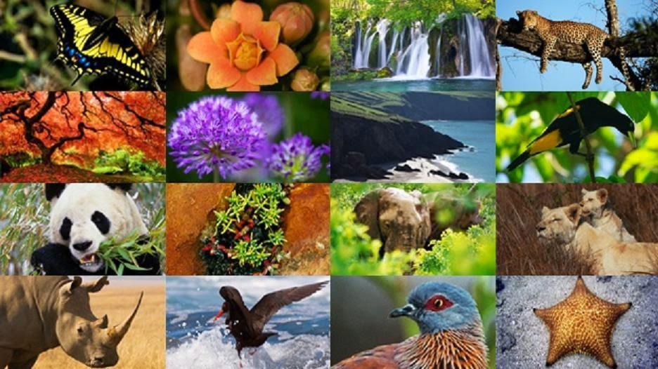 (Video) FAO: La biodiversidad desaparece a pasos agigantados e irreversibles