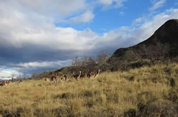 """Bienes Nacionales explica """"redefinición de límites""""del Parque Nacional de la Patagonia"""