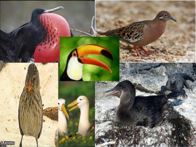 En peligro de extinción el 69 % de las especies de aves de Galápagos