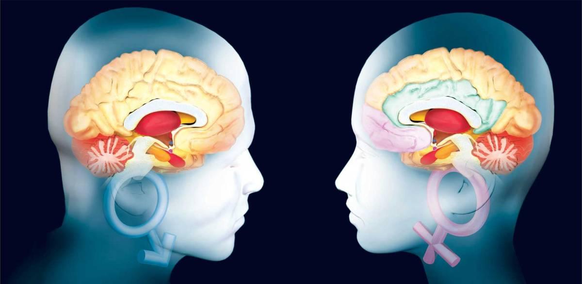 El cerebro de las mujeres se conserva más joven que el de los hombres