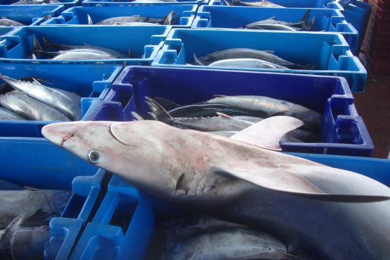 """Humanos amenazan existencia de la megafauna por degustar platos """"exquisitos"""""""