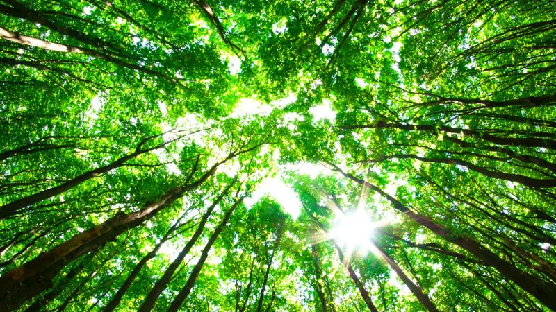Argentina recibe donación de Fondo Verde de la ONU para proteger bosques nativos