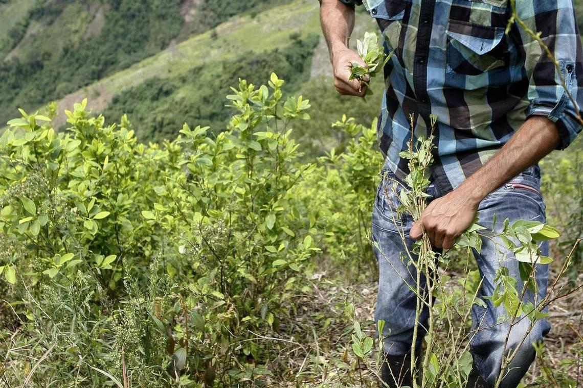 Colombia es el mayor productor de coca y de cocaína en el mundo