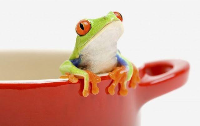 El efecto de la rana hervida en la percepción del cambio climático