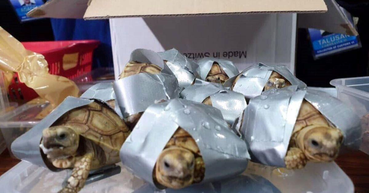 Hallan 1.500 tortugas vivas en maletas abandonadas en aeropuerto de Manila