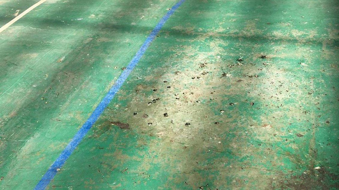 No eran peluches: Fecas de ratones obligaron a suspender las clases en escuela municipal de Maipú