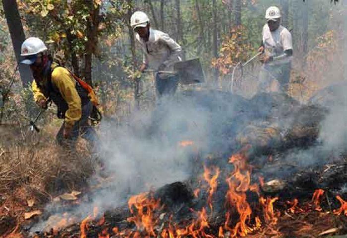 Proliferación de incendios amenaza con destruir el ecosistema de Honduras