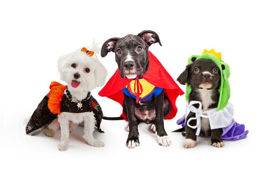 Mascotas se disfrazan para celebrar el Carnaval en Caracas